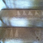 Aurora-Stairs-Carpet-Cleaning