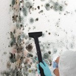 Black-Mold-Remediation-Aurora