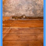 Wall-Mold-Removal-Aurora